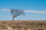 Leafless Lonely Tree (Week 4)