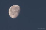 Morning Moon (Week 5)