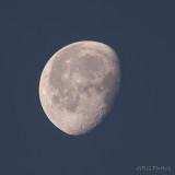 Morning Moon 100% Crop (Week 5)