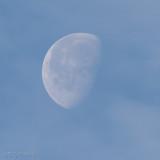 Cloudy Morning Moon 100% Crop (Week 5)