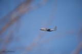 C-130 lost shot (Week 7)