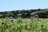 Spring Blooming (Week 12)