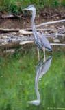 Reflected Heron