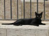 Melilla - Noir noir_03031r.jpg