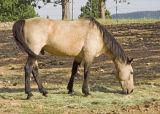 z_MG_2729 Judy Archibald horse.jpg