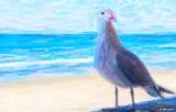 My  Sea Gull.jpg