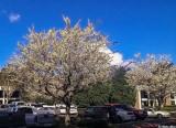 Spring Booming