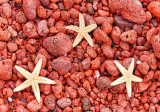 Starfish on Lava Pebble Beach