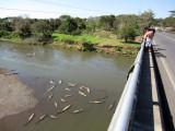 Tarcoles River bridge