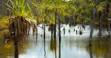 Tropical Cape York