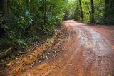 Travelling through Cape York rainforest