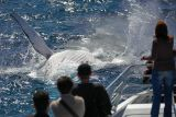 Humpback Whale splash!