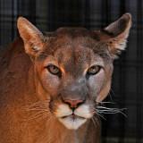 Folsom Zoo Sanctuary - CA