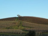 Patterned Hills of Napa