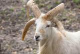 Four Horns