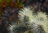 Autumn Cactus