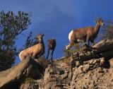 Sheep Rocks