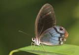 Butterflies, Moths and other arthropods