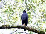 1big bird2.jpg