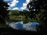 cocodrilo swamp