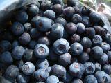 bucket o berries.jpg