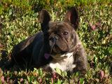 taz in the berry field.jpg