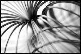 Slinky Study 6