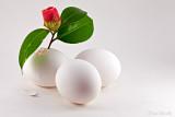 The Capricious Egg