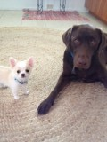 Taser and friend