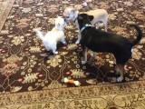 Taser meeting more friends
