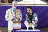 Orchid Isle Shows Best of Breed