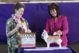 Orchid Isle shows Best of Breed-1st Major