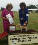 Group 4 at the Windward All Breed shows-April 13, 2013