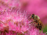Bee Pink!