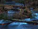 Barnes Creek At Dawn