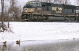 Eastbound 111 passes a Trio of geese enjoying the cold waters of Lake Wells
