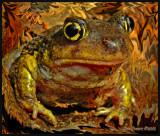 Eastern Spadefoot - Hypno Toad
