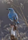 Birds Rare to Arkansas