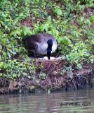 Kathy's Pond 2013