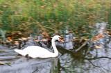 Swan in Marie Antoinette's Hamlet