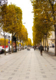 Autumn Leaves along the Champs Elysees