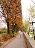 Autumn Leaves on Trees along Seine River