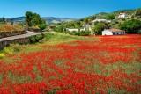 Poppy field, near Santa Ana