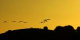 Geese at dawn (1936)