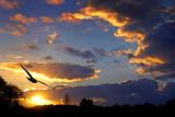 Bird and sunset, Martock