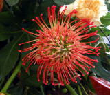 Exotic Red Flower