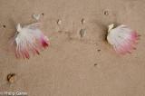 Blossom fallen onto the sand