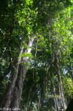 Unspoilt island forests