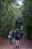 Birdwatchers let loose in the forests (New Caledonia)...