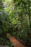 A boardwalk leads to the Grand Kaori, or Big Kauri Pine